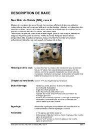 mouton Nez Noir du Valais