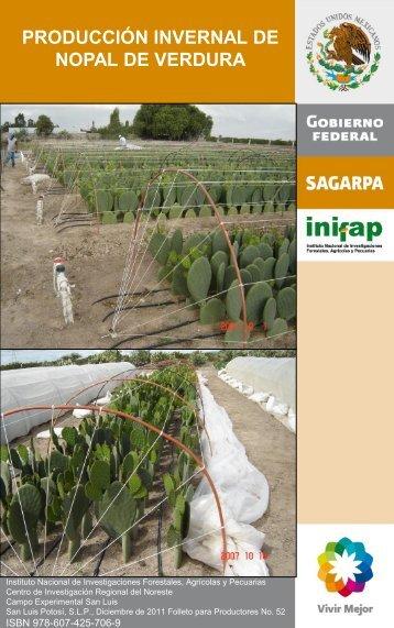 producción invernal de nopal de verdura - Inifapcirne.gob.mx