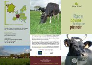 race bovine Bretonne Pie Noir - Slow Food France