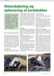 Vinterdækning og opbevaring af jordskokker