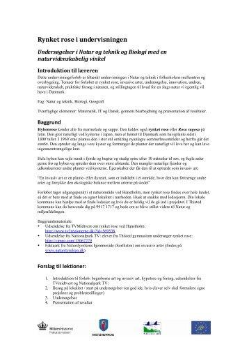 Undervisningsmateriale til tema om rynket rose som ... - Naturstyrelsen