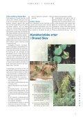 Geologi i skoven, et forskningsprojekt om Draved skov - Geus - Page 5