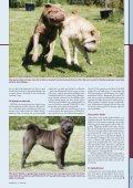 Shar pei - Hunden - Page 2