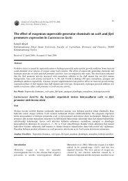 The effect of exogenous superoxide generator chemicals on sodA ...