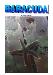 Nr. 3 oktober 2012 - Baracuda Dykkerklub