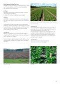 Vegetabilsk produktion i Urbane omgivelser - LandbrugsInfo - Page 3