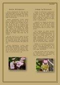Pelargonier - Bomhuset.dk - Page 2