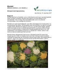 Økodyrkningsvejledning for blomkål 2007 - LandbrugsInfo