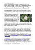 Økodyrkningsvejledning for blomkål 2007 - LandbrugsInfo - Page 2