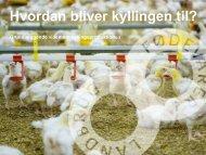 Kylling i undervisningen.pdf - Danpo