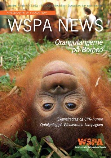 Orangutangerne på Borneo - WSPA Danmark