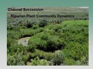Channel Succession Riparian Plant Community ... - The Jornada