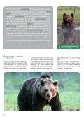 Bjørnesafari i den finske ødemark - Danmarks Naturfredningsforening - Page 2