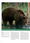 Bjørnesafari i den finske ødemark - Danmarks Naturfredningsforening - Page 6