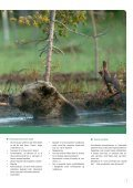 Bjørnesafari i den finske ødemark - Danmarks Naturfredningsforening - Page 7