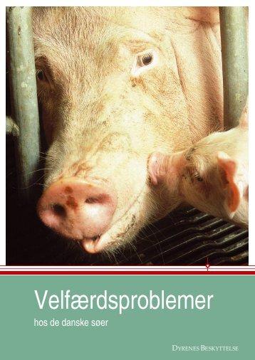 Velfærdsproblemer hos de danske søer - Dyrenes Beskyttelse