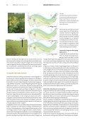 Natuurhistorisch Maandblad - Maas in Beeld - Page 7