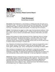 Field Bindweed - WSU Extension Counties