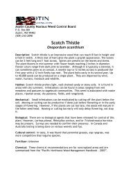 Scotch Thistle - WSU Extension Counties