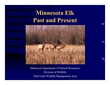 Minnesota Elk Past and Present - Minnesota Department of Natural ...