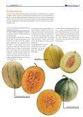 """1x1-Warenkunde """"Melonen"""" - khd-Blog - Seite 4"""