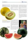 """1x1-Warenkunde """"Melonen"""" - khd-Blog - Seite 6"""