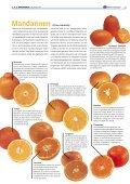 """1x1-Warenkunde """"Zitrus-Früchte"""" - khd-Blog - Seite 4"""
