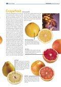"""1x1-Warenkunde """"Zitrus-Früchte"""" - khd-Blog - Seite 5"""