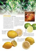 """1x1-Warenkunde """"Zitrus-Früchte"""" - khd-Blog - Seite 6"""