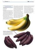 "1x1-Warenkunde ""Bananen"" - khd-Blog - Seite 4"