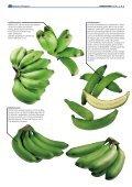 "1x1-Warenkunde ""Bananen"" - khd-Blog - Seite 5"