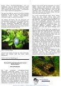 Online Aquariummagazin - Seite 7
