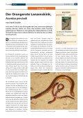 D Der Chinesische Wasserskink - Die Wirbellosen - Seite 6