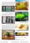 OAM Ausgabe September 2009 - Online Aquariummagazin - Page 5