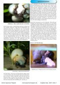 OAM Ausgabe September 2009 - Online Aquariummagazin - Page 7
