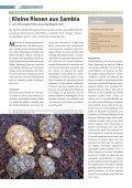 Lexikon - Die Wirbellosen - Seite 4