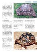 Lexikon - Die Wirbellosen - Seite 5