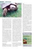 Lexikon - Die Wirbellosen - Seite 6