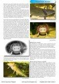 OAM-Ausgabe 04/2008 - Die Wirbellosen - Page 3