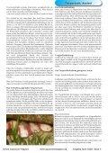 OAM-Ausgabe 04/2008 - Die Wirbellosen - Page 4