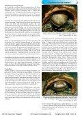 Download - Online Aquariummagazin - Page 4