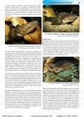 Download - Online Aquariummagazin - Page 5