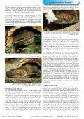 Download - Online Aquariummagazin - Page 6