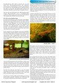 Online Aquarium-Magazin Mai 2010 - Die Wirbellosen - Page 6