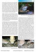 OAM Ausgabe März 2010 - Online Aquariummagazin - Page 5