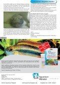 OAM Ausgabe November 2009 - Die Wirbellosen - Page 4