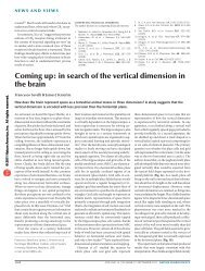 Coming up: in search of the vertical dimension in the brain