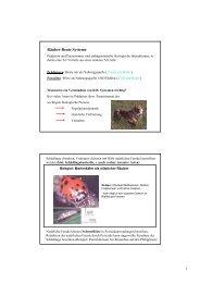 PowerPoint - Neu_Oek1_jeltsch_4_web