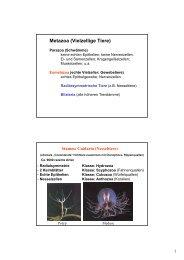 Metazoa (Vielzellige Tiere)