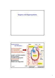 Organe und Organsysteme